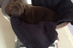 Pups | een kleine week oud…