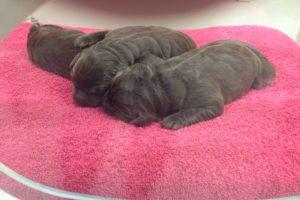 Pups | In de couveuse