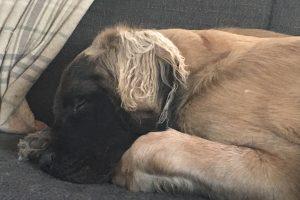 Slapen | Hero in diepe rust