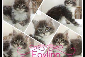 Familie | Faylinn