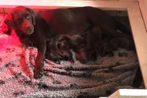 Pups | Youne's 2e nest