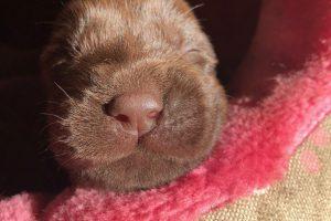 Pups Youne | Zonaanbidster