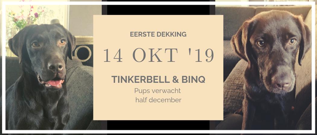 Verwacht | Pups van Tinkerbell en Binq